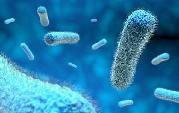 Are microbes solely to blame - with NES body-field scan and therapy you can improve your well being and health right from the comfort of your home.