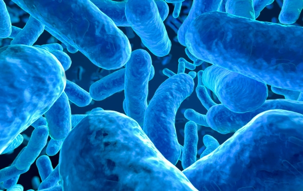 Discover your gut health and how your superfoods can restore your microbiome.