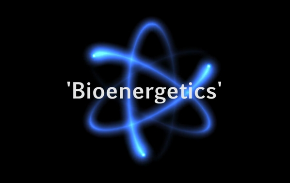 What is bioenergetics?