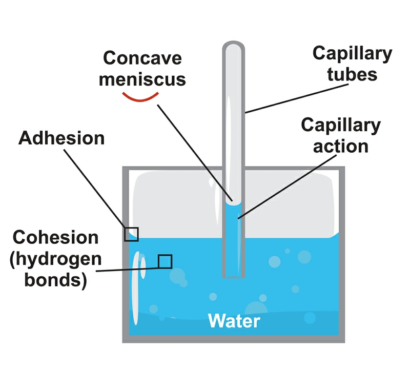 The strange science of water - the basis for NES Infoceuticals.